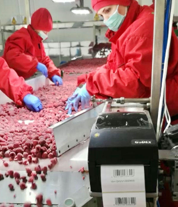 IQF fruit traceability
