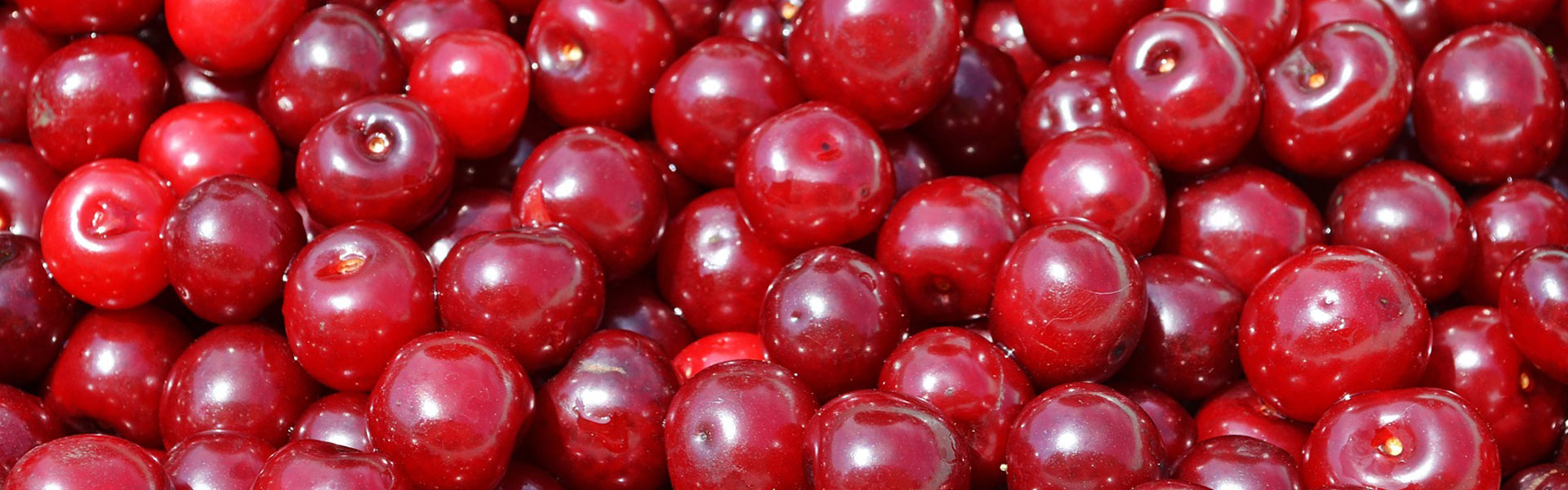 IQF fruit - deep-frozen sour cherry