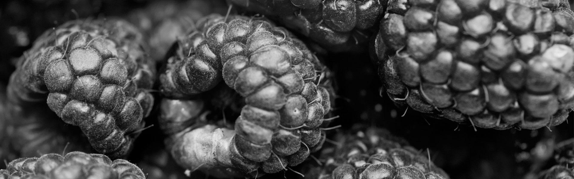 IQF fruit - deep-frozen blackberry