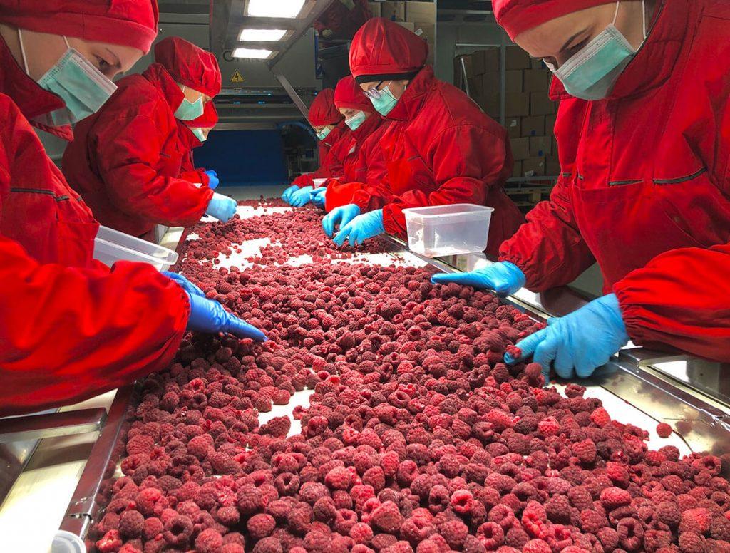Deep frozen fruits processing