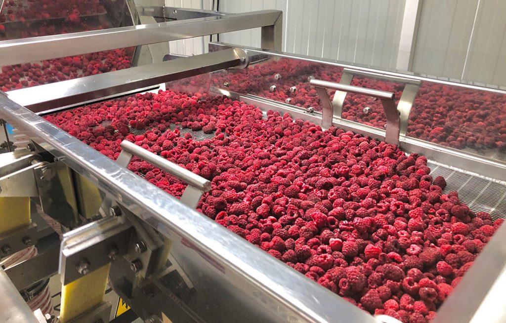 Raspberry processing line