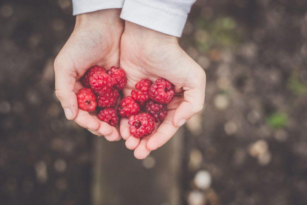 Raspberries Serbia
